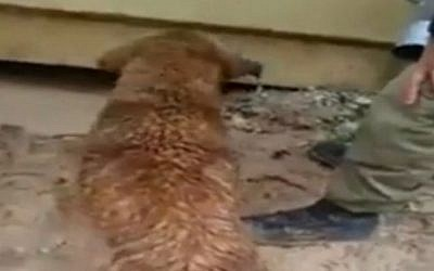 A dog rescues her pups from under a rain-drenched container (Courtesy)