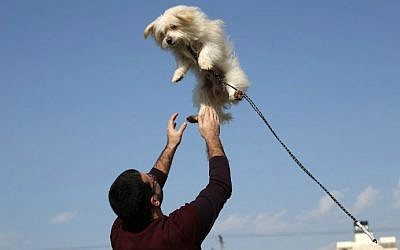 A Palestinian man plays with a dog during the first dog show in Gaza City, on February 5, 2016, organized by dog owners in the Gaza Strip. (Mohammed Abed/AFP)