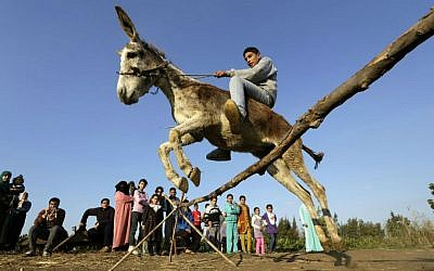 In this Friday, Feb. 5, 2016 picture, Egyptian farmer Ahmed Ayman, 14, rides his trained donkey as he jumps over a barrier in the Nile Delta village of Al-Arid about 150 kilometers north of Cairo, Egypt. (AP Photo/Amr Nabil)