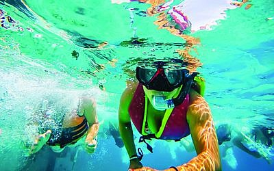 Snorkeling at the reefs in Eilat - explored extensively by the Israel's Ecosystems program.   Photo Credit:  Leetal Elmaleh