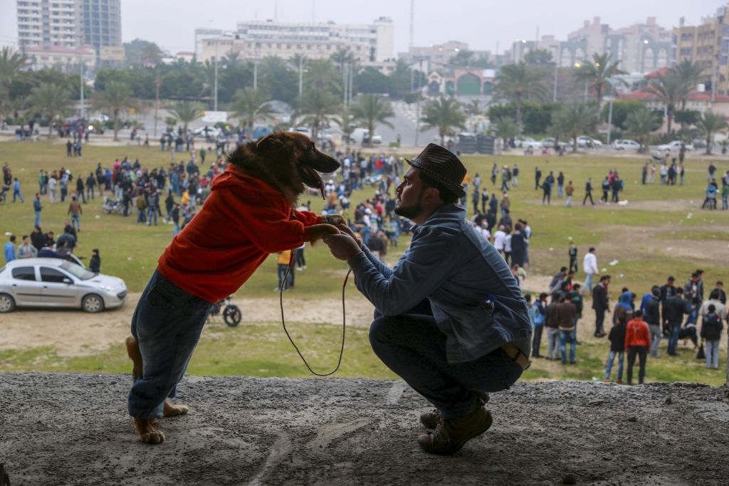 Palestinian dog owners attend the first dog show in Gaza City, on February 5, 2016, organised by dog owners in the Gaza Strip. (Emad Nassar/Flash90)