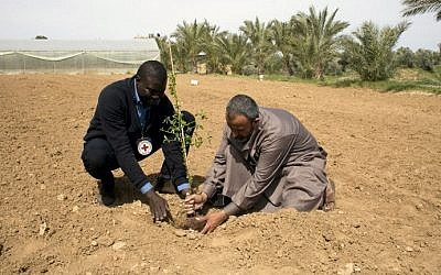 Mamadou Sow (L), Head of Gaza sub delegation in the International Committee of the Red Cross (ICRC), helps a Palestinian farmer plant a tree in Wadi as-Salqa village, near the Gaza Strip's border with Israel, March 2, 2016. (AFP / SAID KHATIB)