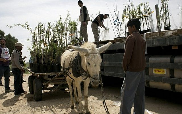 Members of the Gaza sub delegation in the International Committee of the Red Cross (ICRC), unload almond trees, distributed by the ICRC, from a cart in Wadi as-Salqa village near Gaza's border with Israel, March 2, 2016. (AFP/SAID KHATIB)
