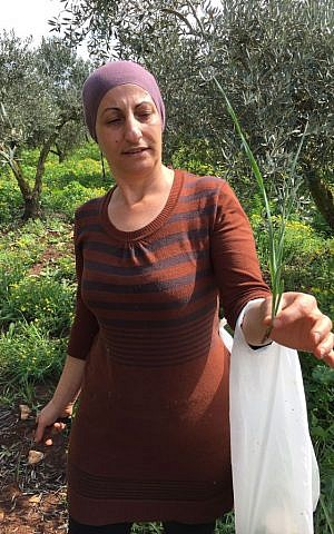 Zada Soueida married into a foraging family, and now picks winter greens annually, cooking them as part of her family's weekly meals (Jessica Steinberg/Times of Israel)