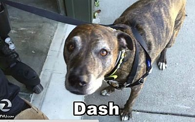 Dash, a dog confused with 'Daesh,' or Islamic State, by a California bank in March of 2016. (Screen capture/KTVU2)