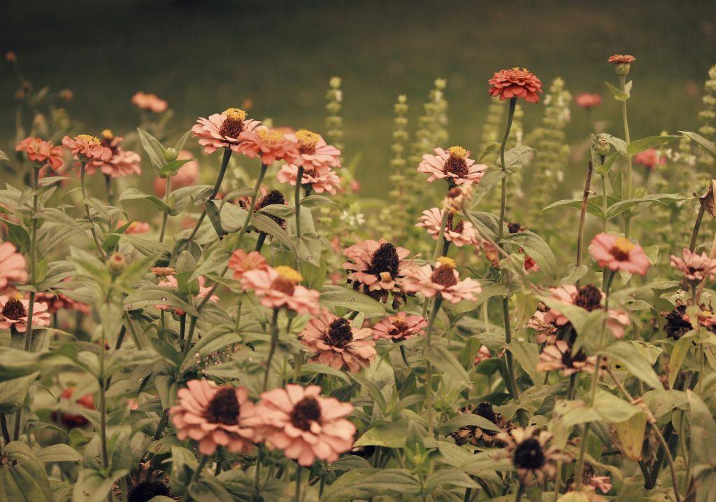 https://www.timesofisrael.com/widow-of-slain-off-duty-solr-insists Flower Designs For Raised Garden B E A Html on