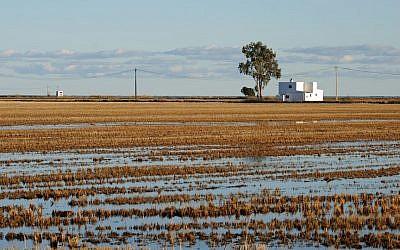 Rice field (Pixabay)