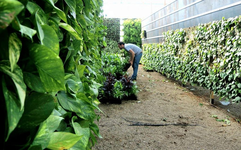 Tomorrow's farmers will need ladders as green goes vertical