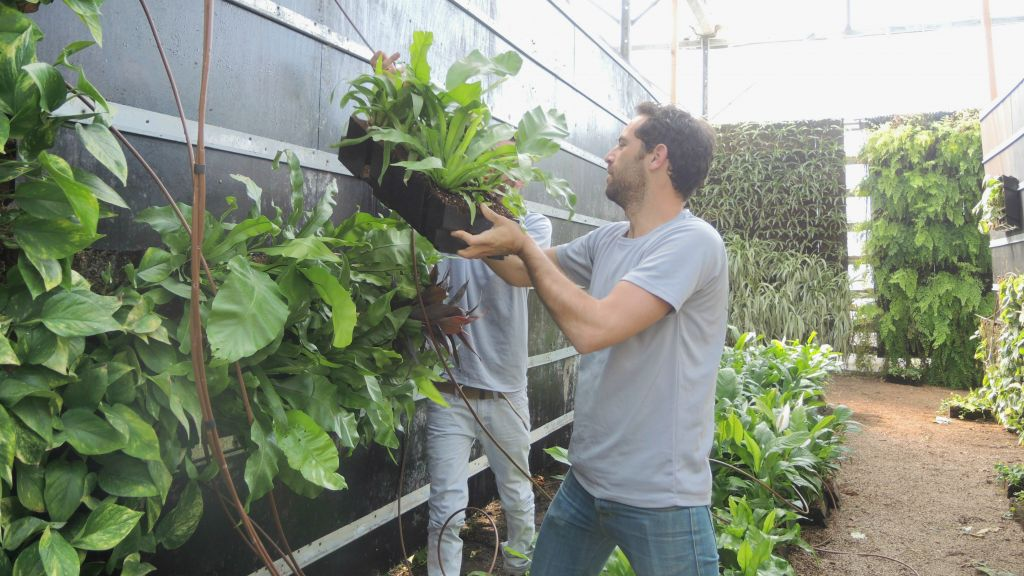 "GreenWall Israel workers install a vertical garden using plant ""blocks"" in the office's greenhouse on March 23, 2016. (Melanie Lidman/Times of Israel)"
