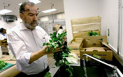 In this April 18, 2016 photo, Rabbi Raphael Berdugo checks parsley for insects as part of the preparation for the Passover holiday at the Waldorf Astoria resort at Disney World in Orlando, Fla. (AP Photo/John Raoux)