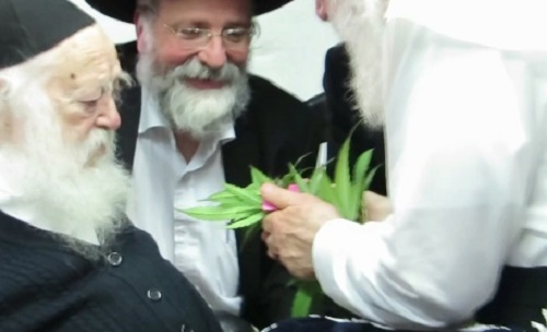 Rabbi Kaniyevski smelling the leaves of a cannabis plant. (Screenshot from YouTube)