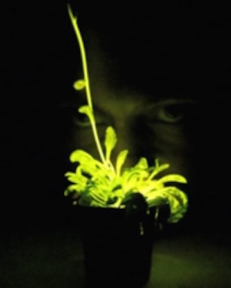 Artist's rendition of a Glowing Plant (Courtesy)