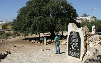 "The ""Lone Oak,"" a surviving symbol of the pre-1948 community in the Gush Etzion area (Shmuel Bar-Am)"