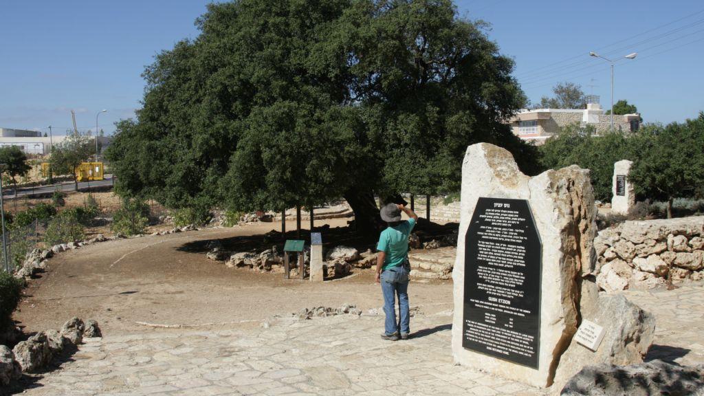 """The """"Lone Oak,"""" a surviving symbol of the pre-1948 community in the Gush Etzion area (Shmuel Bar-Am)"""