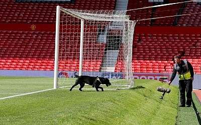 A police sniffer dog on the pitch at Old Trafford stadium after a suspect package being found before a Manchester United match on May 15, 2016. (Martin Rickett/PA via AP)