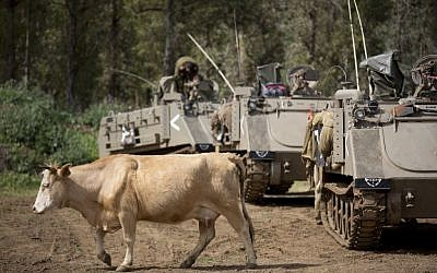 In this Thursday, April 21, 2016 photo, a cow walks past Israeli military APC in the Golan Heights near the border with Syria. (AP Photo/Ariel Schalit)