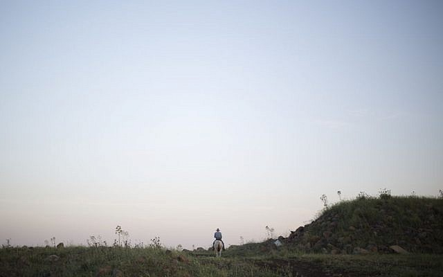 In this Thursday, April 21, 2016 photo Israeli cowboy Yehiel Alon heads out on his horse to round up some 650 head of cattle in the Golan Heights near the border with Syria. (AP Photo/Ariel Schalit)