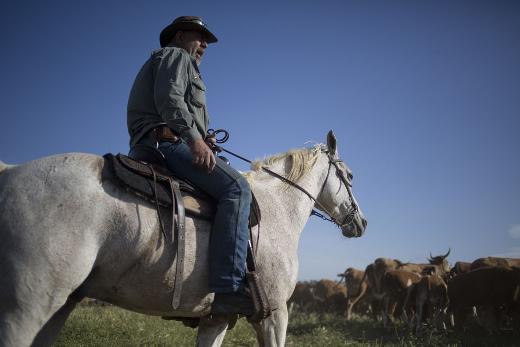 In this Thursday, April 21, 2016 photo, Druze cowboy Wafiq Ajami, gathers the cattle in the Golan Heights near the border with Syria. (AP Photo/Ariel Schalit)