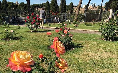 Each spring visitors flock to enjoy the 1,100 species of roses growing in the garden (Rossella Tercatin/Times of Israel)