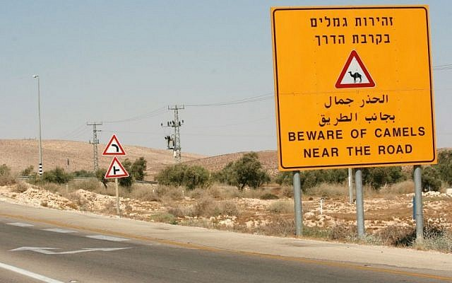 Sign warning drivers of camels on a Negev highway seen on August 26, 2007. (Rebecca Zeffert/Flash90)