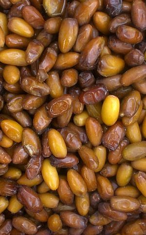 Medjool dates are filling and give a burst of energy (Wikimedia commons)