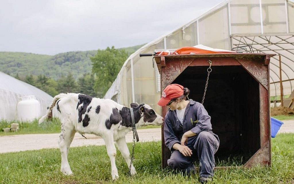 Illustrative: Rachel Freund is the herdswoman at Freund's Dairy Farm in East Canaan, Connecticut. (Courtesy Cabot Creamery)