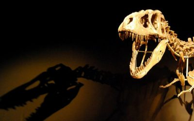 Illustrative photo of a dinosaur skeleton. ('Light the dinosaur'/Ruben/CC BY 2.0)