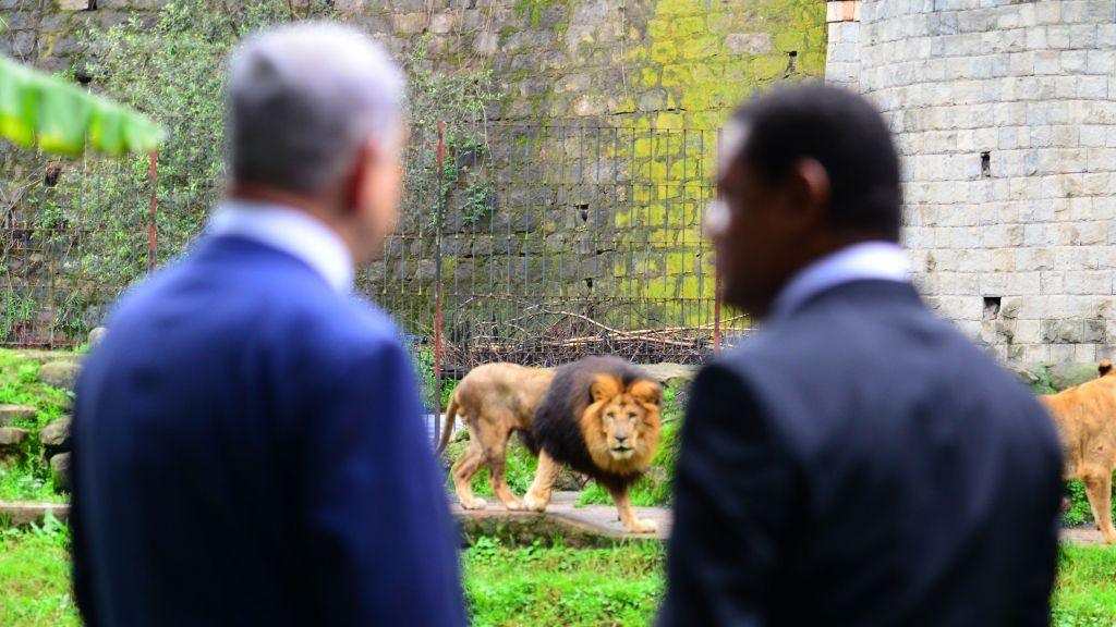 Prime Minister Benjamin Netanyahu and Ethiopian President Mulatu Teshome watch lions at the presidential compound in Addis Ababa, Ethiopia, on July 7, 2016. (Kobi Gideon/GPO)