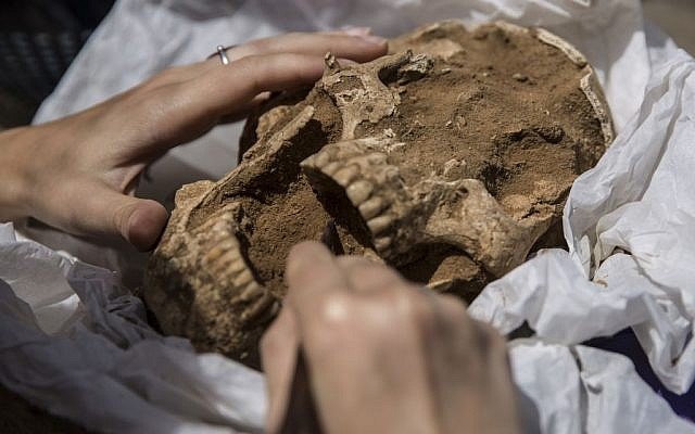 A skull from a 10th-9th century BC burial in the excavation of the Philistine cemetery by the Leon Levy Expedition to Ashkelon. (Tsafrir Abayov/Leon Levy Expedition)