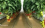 Prospera's technology helps keep tabs on crops (Courtesy)