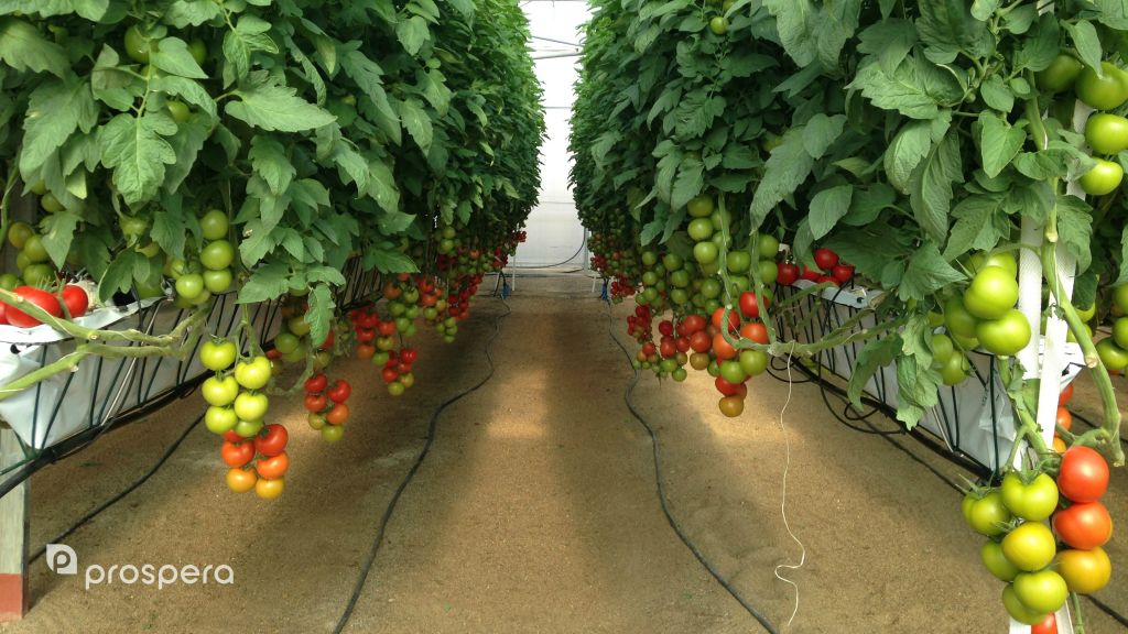 Prospera Raises Funds To Expand Agro Tech Globally The
