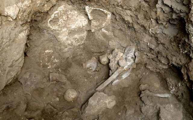 Bones of a prehistoric woman discovered in a burial site in the Hilazon cave in northern Israel. (Naftali Hilger)