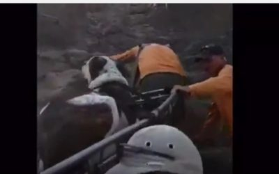 Rescue workers carry a hurt dog off a hiking trail in northern Israel (screen capture:  YouTube)