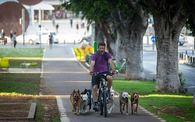 A professional dog 'walker' biking with his clients on Rothschild Boulevard in Tel Aviv (Nati Shochat/Flash 90)
