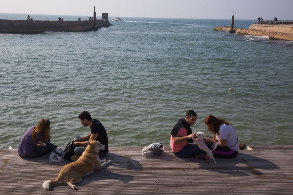 Dogs and their owners by the sea at the Tel Aviv port (Miriam Alster/Flash 90)