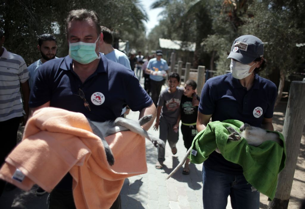 Four Paws rescue workers carry the monkeys out of the Khan Younis zoo. (Four Paws)