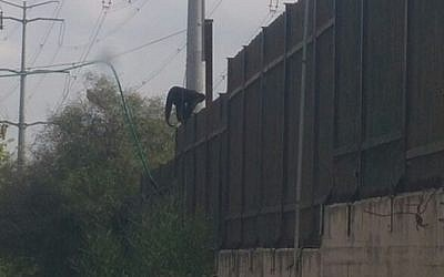 Spider monkey escaping from Hai-Kef zoo in Rishon Lezion (Israel police)