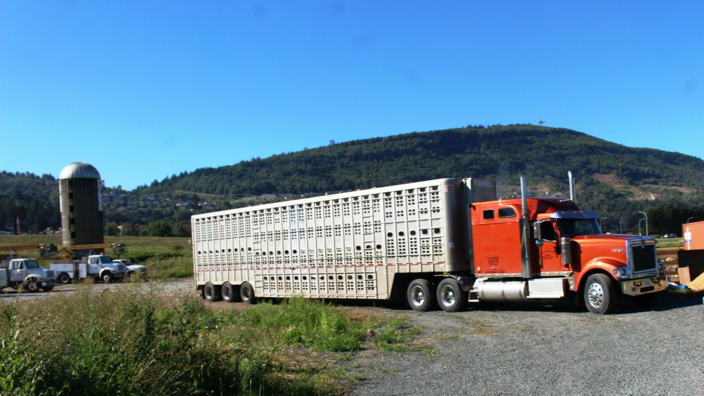 The truck transporting the sheep departed from the farm in Abbotsford, Canada, outside of Vancouver, on Friday, July 29, 2016. (courtesy Gil Lewinsky)