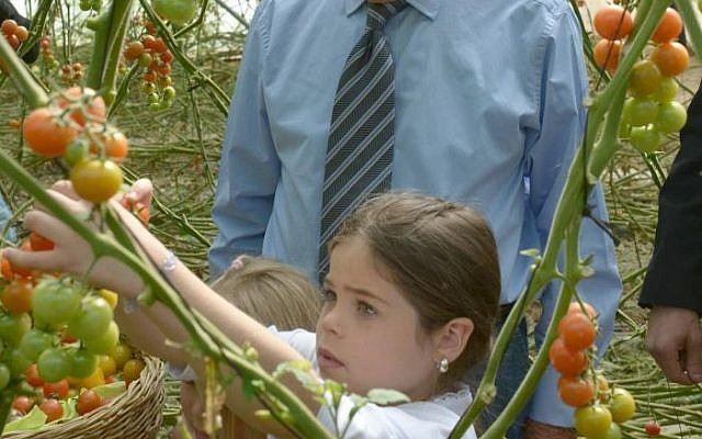 President Peres visiting cherry tomato greenhouses in Israel's Arava desert (GPO)