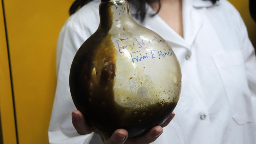 Christine Haj, a post-doctoral student in Mechoulam's lab, holds a beaker of pure THC in the Hebrew University lab on September 1, 2016. THC, the principal psychoactive constituent of cannabis, can be an amber or gold colored glassy solid when cold, and becomes viscous and sticky if warmed. (Melanie Lidman/Times of Israel)