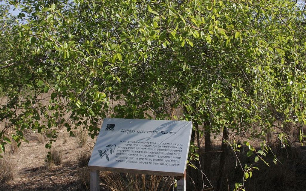 Figs, olives, almonds and more: Exploring Israel's Biblical