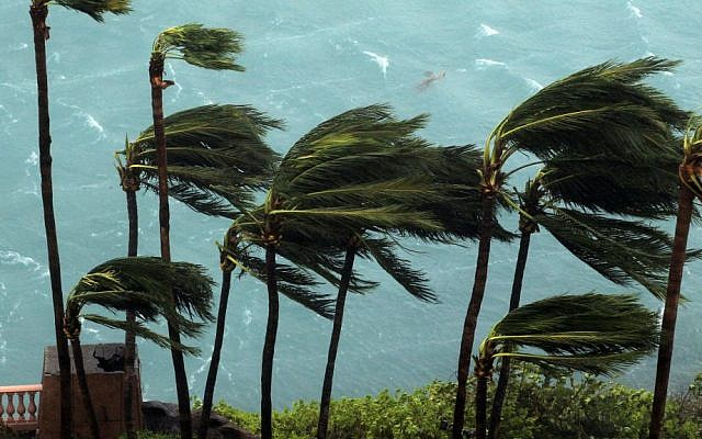 Wind brought by Hurricane Matthew blows palm trees on Paradise Island in Nassau, Bahamas, Thursday, Oct. 6, 2016. (AP Photo/Tim Aylen)