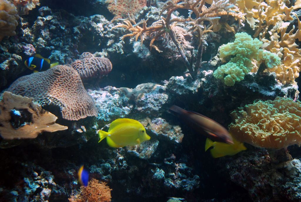Some of the 150 fish and many coral in the aquarium. (Miriam Nahum/Times of Israel)