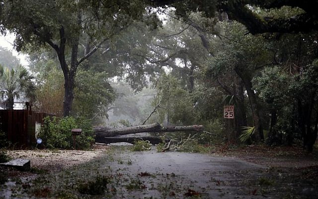 A fallen tree from Hurricane Matthew blocks the road on St. Simons Island, Ga., after residents were ordered to evacuate, Friday, Oct. 7, 2016. (AP Photo/David Goldman)