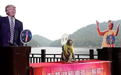 "A monkey holds a fan with Chinese characters that read ""elected"" as it sits between cardboard cutouts of US Presidential candidates Donald Trump and Hillary Clinton , at a park in Changsha, in China's Hunan province on November 3, 2016. ( AFP PHOTO / STR / China OUT)"