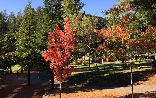 The campus of the Union for Reform Judaism's Camp Newman in northern California. (Facebook)