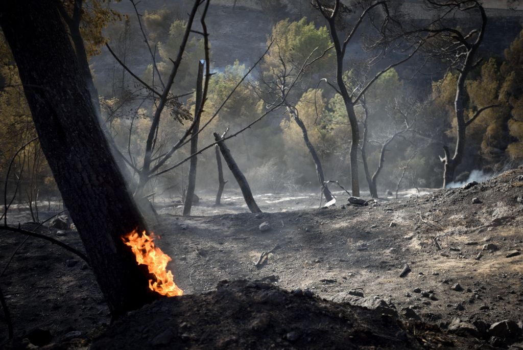 Flames from a massive forest fire in Haifa still burning on November 25, 2016. The massive fires in the city a day earlier led to the evacuation of tens of thousands of residents (Gili Yaari /Flash90)