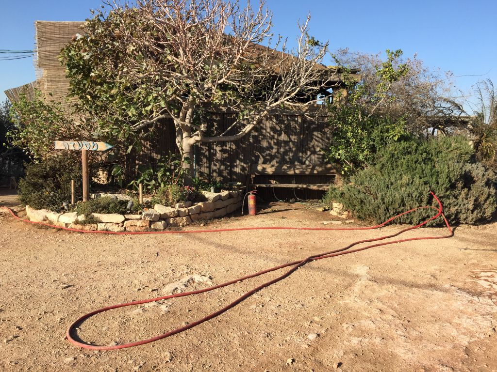 The front of Rama's Kitchen, where a red fire hose shares the space with a fig tree, which will be fine next spring, said Rama Ben Zvi (Jessica Steinberg/Times of Israel)
