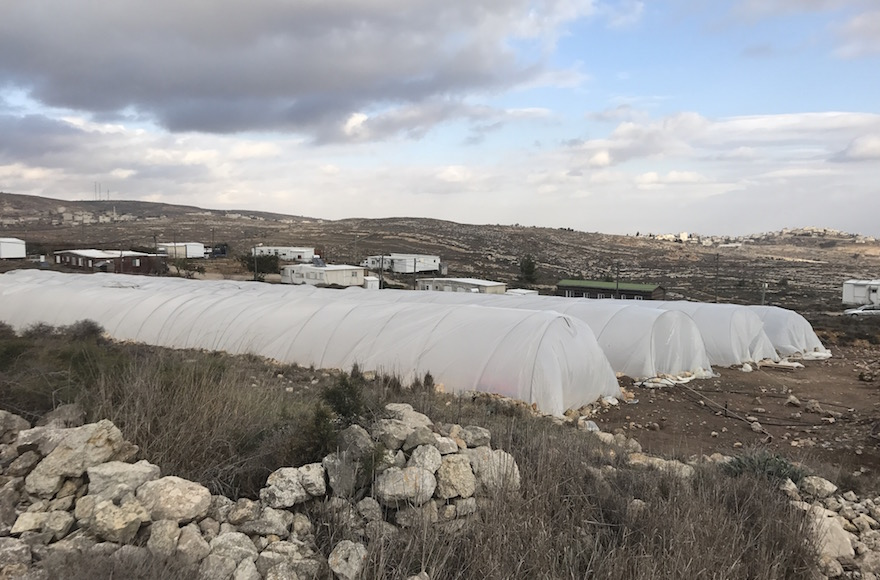 Greenhouses providing shelter to the hundreds of young people who have come to protest in Amona, Dec. 13, 2016. (Andrew Tobin/JTA)