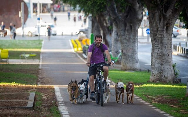 A man in Tel Aviv rides a bicycle with his dogs running alongside on June 18, 2015. (Miriam Alster/FLASH90)